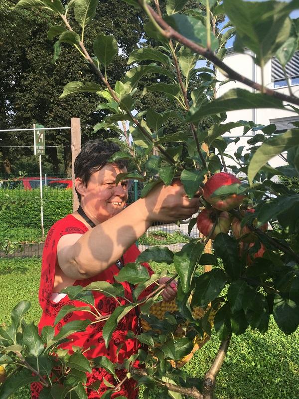 jabolka (2)