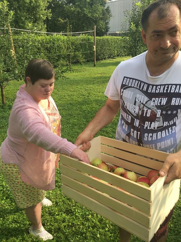 jabolka (5)