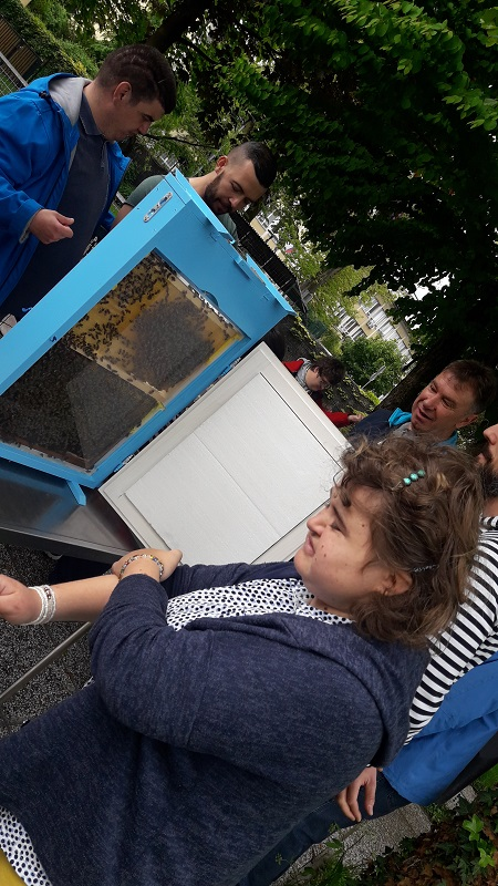 čebele (3)