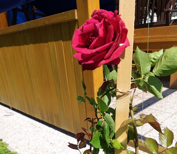 vrtnica.jpg